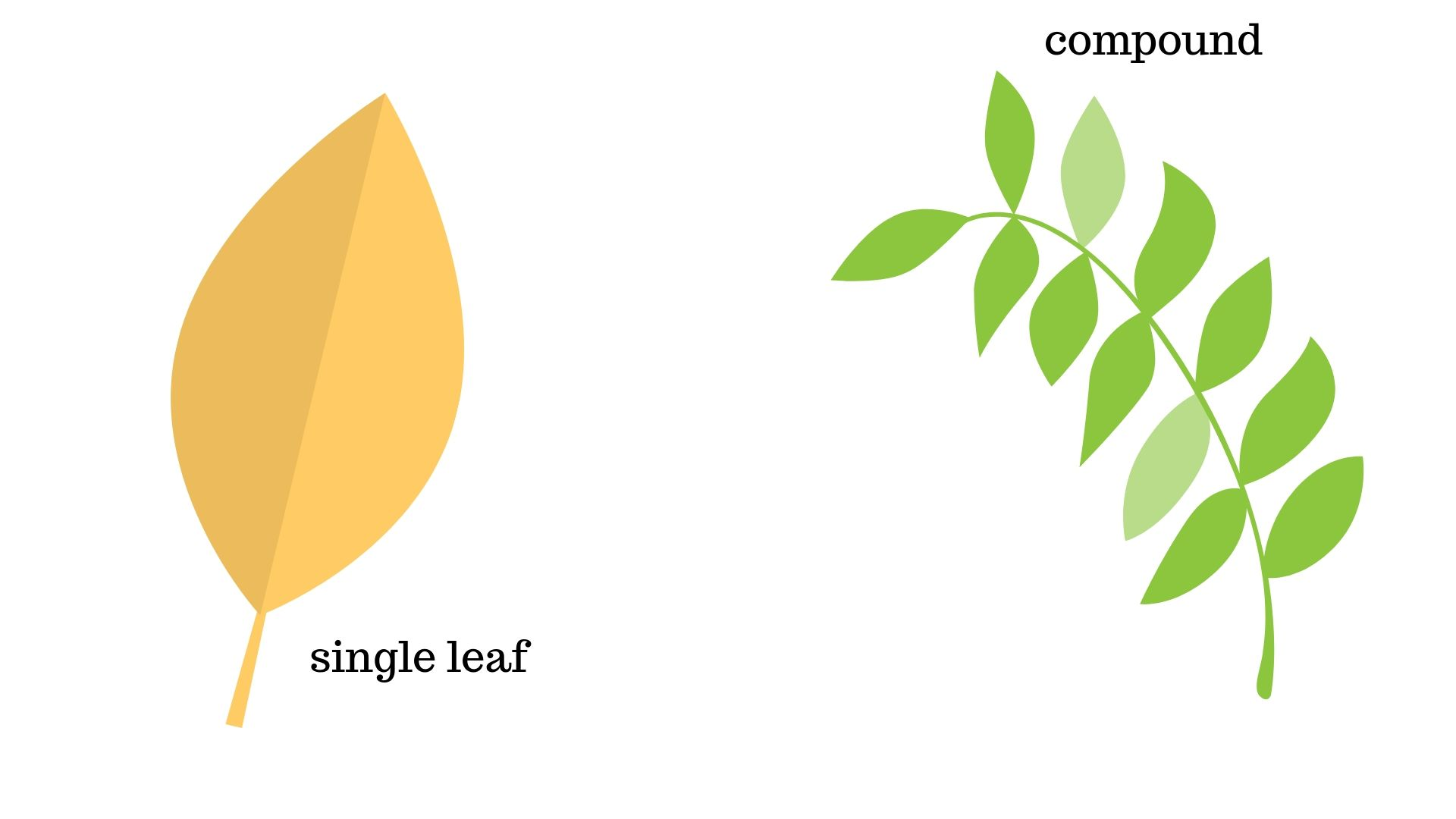 Image for Are the leaves compound?