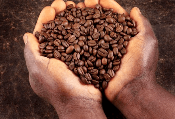 A pair of hands holding coffee beans