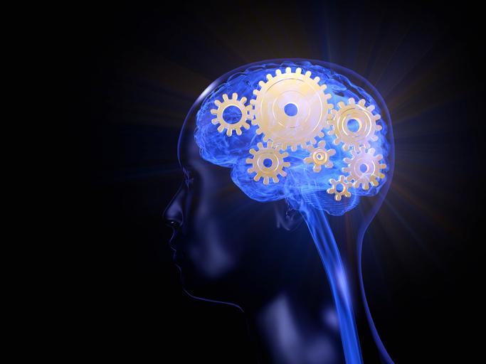 3D of male brain