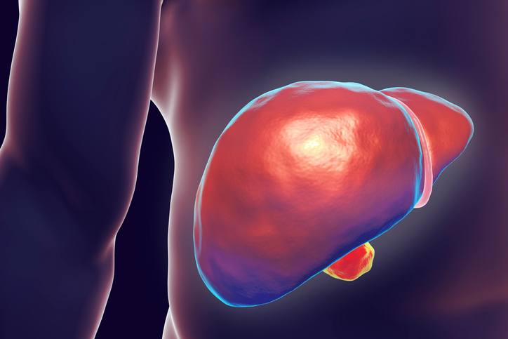 Liver in body hepatitis