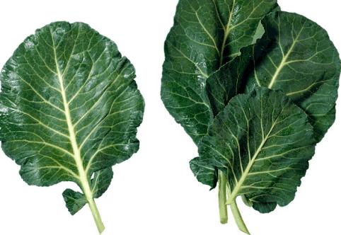 Three collard green leaves