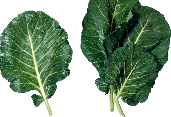 Three collard green leaves