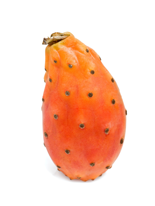 one prickly pear