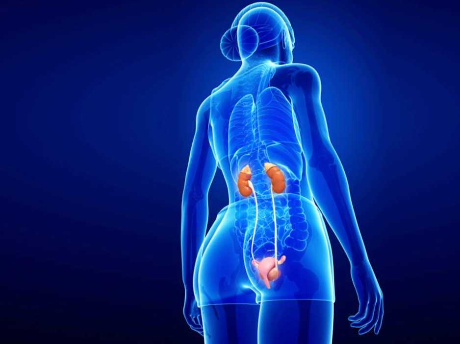 How To Clean Your Kidneys Drink Foods And Exercises Blackdoctor