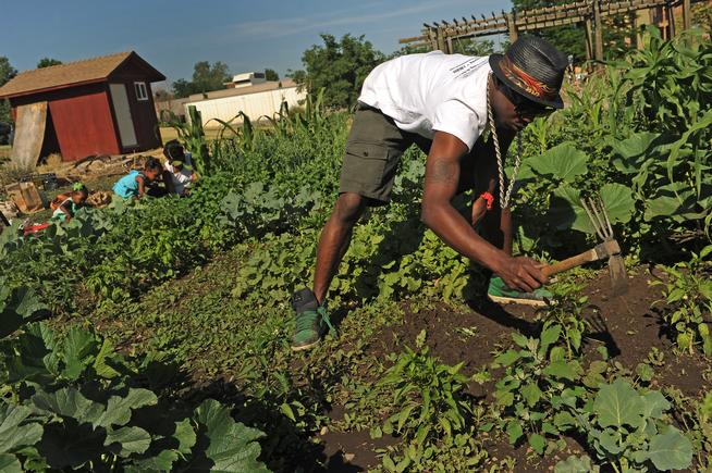"""DENVER, CO - JULY 3: Ietef Vita, aka, DJ Cavem Moetavation, right, gets rid of weeds as his wife Neambe Leadon Vita, in back at right, and her daughter Selasia, 3, in blue and Libya, 21 months, in green on left, plant seeds in the couple's gardens at 33rd and Elm street in Denver, CO. on July 3, 2013. The couple try to grow as much food as possible as part of their vegan and healthy diet. As part of our """"Summer of Love"""" series for the Style section we profile the relationship of DJ Cavem Moetavation (a.k.a. Ietef Vita) and his wife Neambe Vita. They are proud and longtime Five Points residents. They're artists, community activists, musicians, teachers and more. They espouse the idea of being vegan or vegetarian and promote eating healthfully and organically. Photo by Helen H. Richardson/The Denver Post)"""