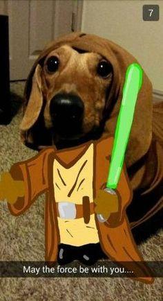 dogsnapchat