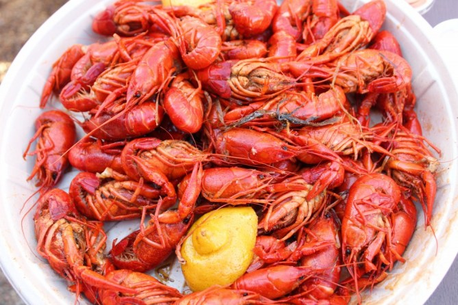 Girls Love Crawfish-30