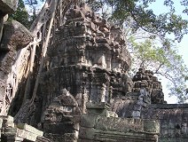 Angkor-wat-forest