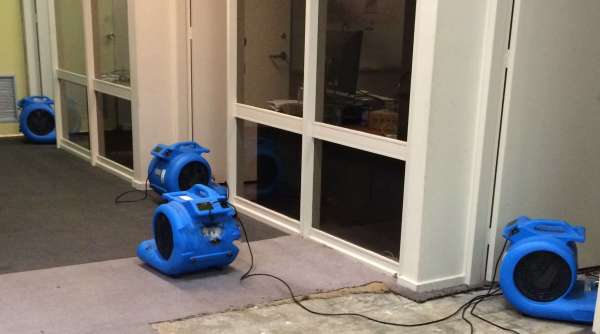 Best Carpet Cleaning Company Guide | Black Gold Carpet ...