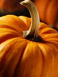 pumpkin-hair-and-skin-benefits