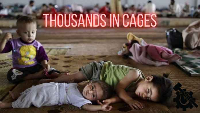 Kids in Cages feature image