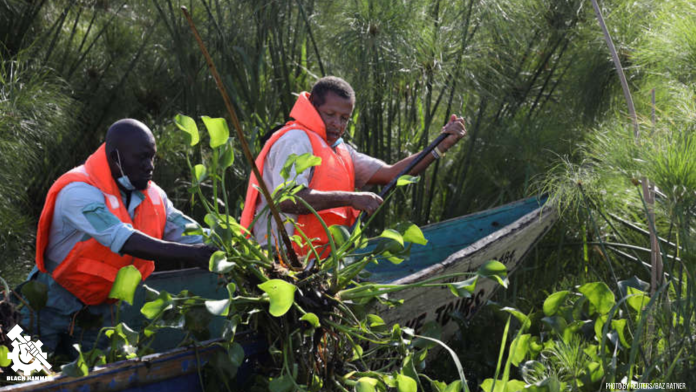 Water Hyacinth collection for biogas