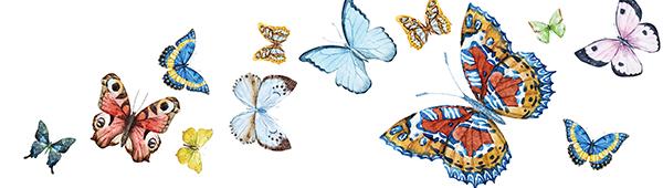 Buterflies_baseImg