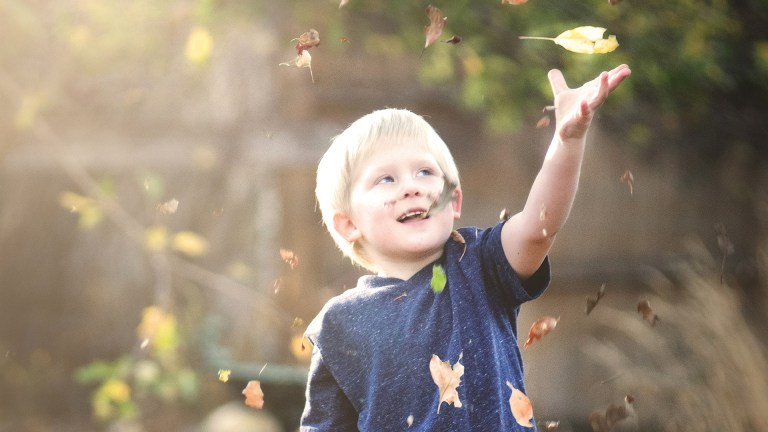 Fall Boy Leaves