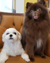 Ban Dalgom Blackpink Jisoo Dog and Kuma Jennie Dog
