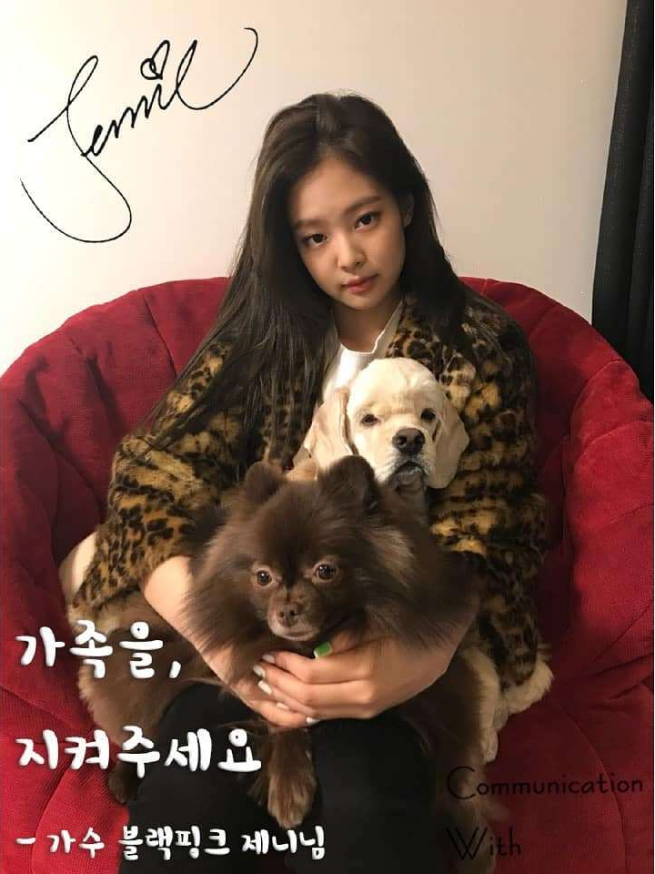 Blackpink Jennie Cheongdam Woori Animal Hospital Protect pet