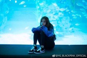 Blackpink Rose aquarium 2018