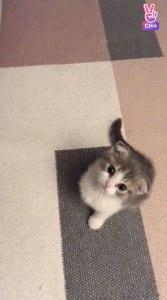 Blackpink Lisa Cat Leo