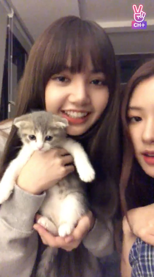 Blackpink Lisa Cat Leo