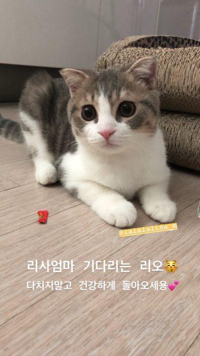 BLACKPINK Jisoo Instagram Story 30 July 2018 Leo Lisa