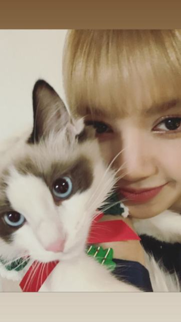 BLACKPINK Lisa Cat Luca