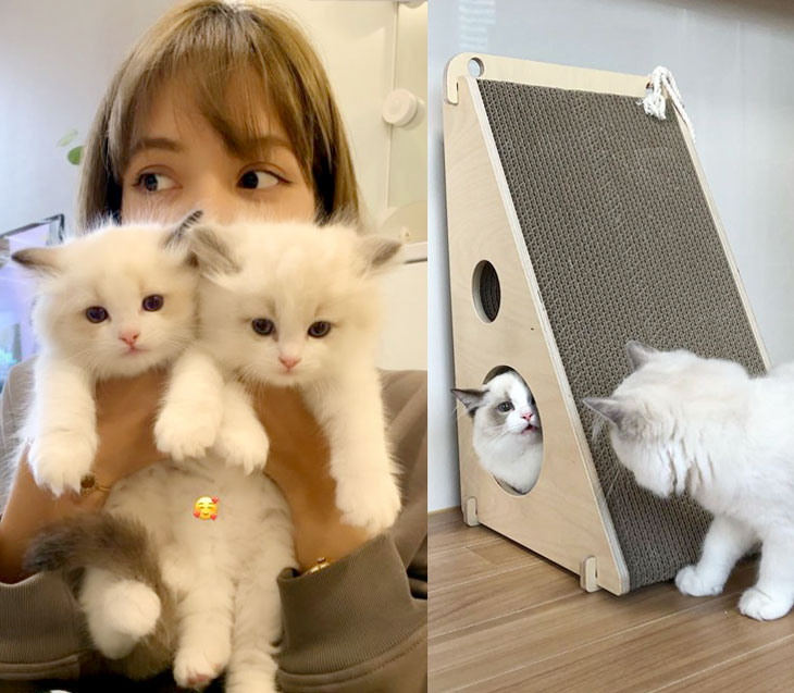 BLACKPINK Lisa Cat Lily