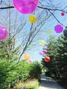 assorted color balloons attached on tree branches