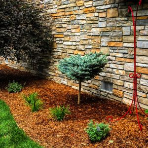tree and shrub plantings