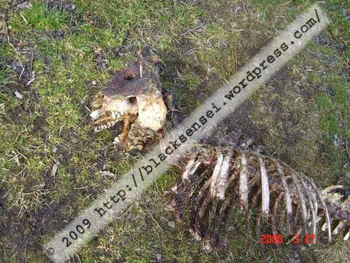 skelett_x2
