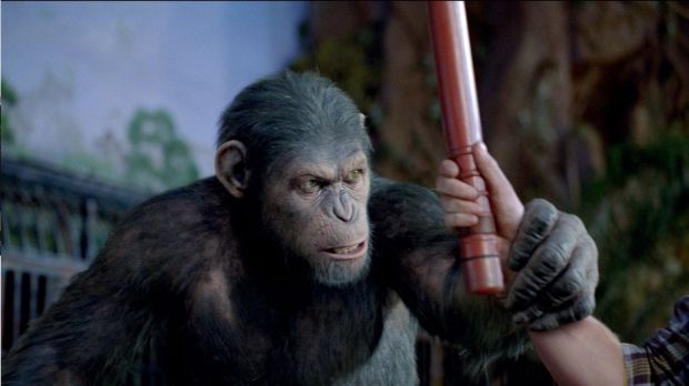 rise-of-the-planet-of-the-apes-caesar-vs-draco-620x