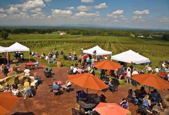 6 Leave It All Behind: How to Experience Tuscan Wines in the Heart of North Carolina