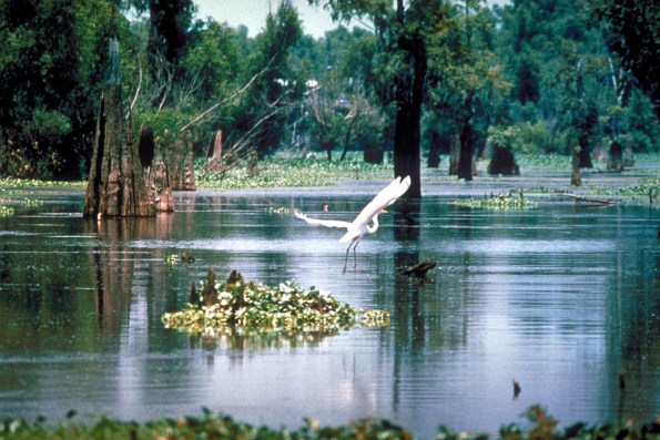 Atchafalaya_Basin-595x397 Black Southern Belle Travel: Three South Louisiana Treasures