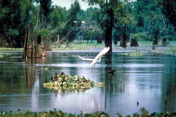 Atchafalaya_Basin-595x397 Black Southern Belle Travel: Three South Louisiana Treasures