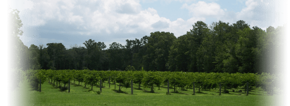 Black_Owned_Vineyards_Tilford_Winery-595x217 Black Owned Wineries in the South You Must Visit