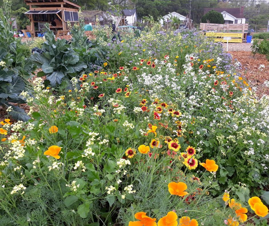 56942474_1031929550330792_7315900086297296896_n Black Farming in South Carolina: Fresh Future Farm launches Kickstarter to Buy Land