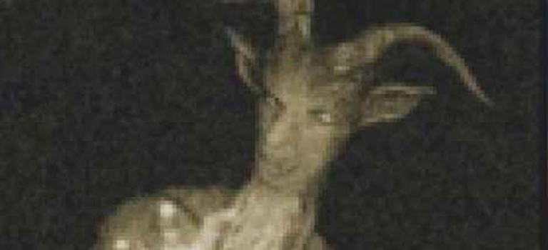 【怪物目擊】波普利克羊角怪:恐怖怪物催眠路人奪命!還是好奇心殺死人?