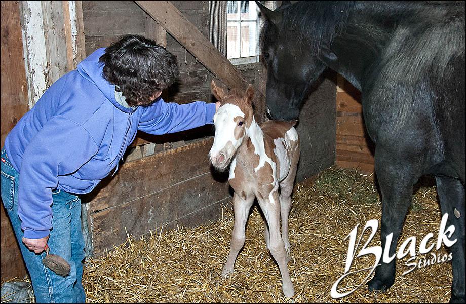 04-10 Foal 04