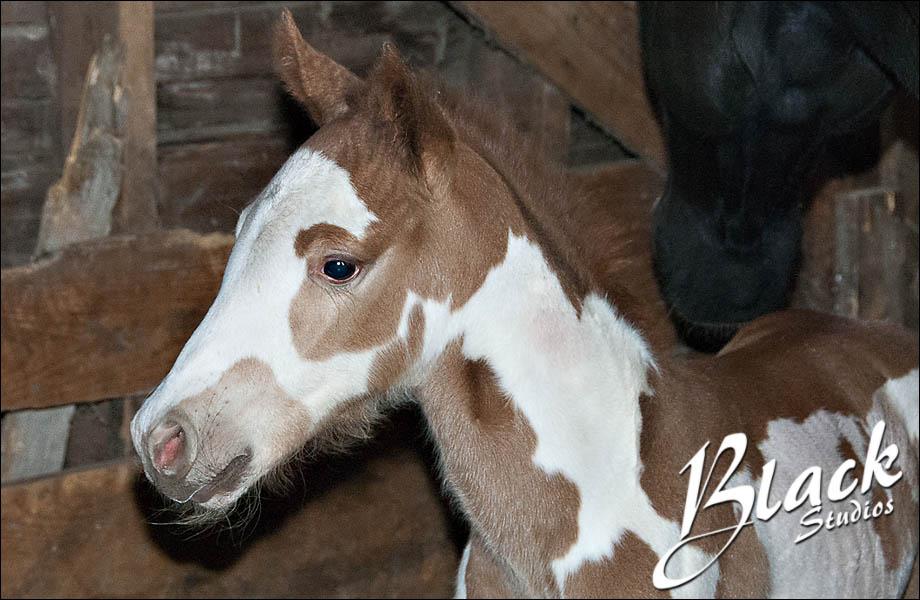 04-10 Foal 06