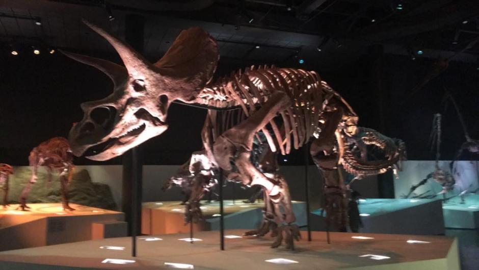 Dinosaur Remains