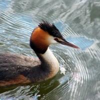 Duck spotting