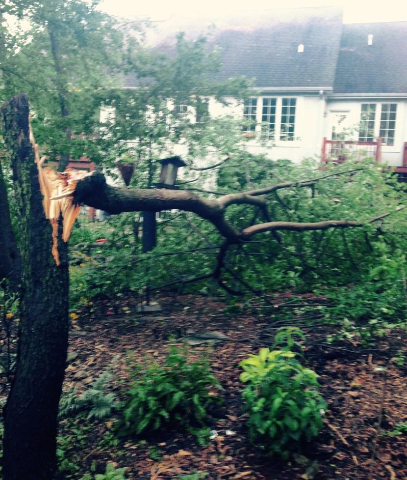 tree down - 1
