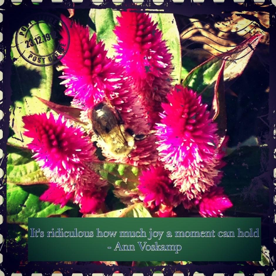 honeybees - 1