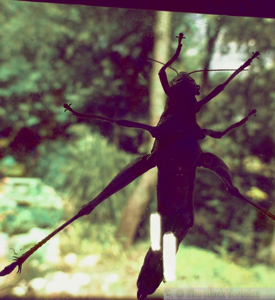 grasshoppr 1