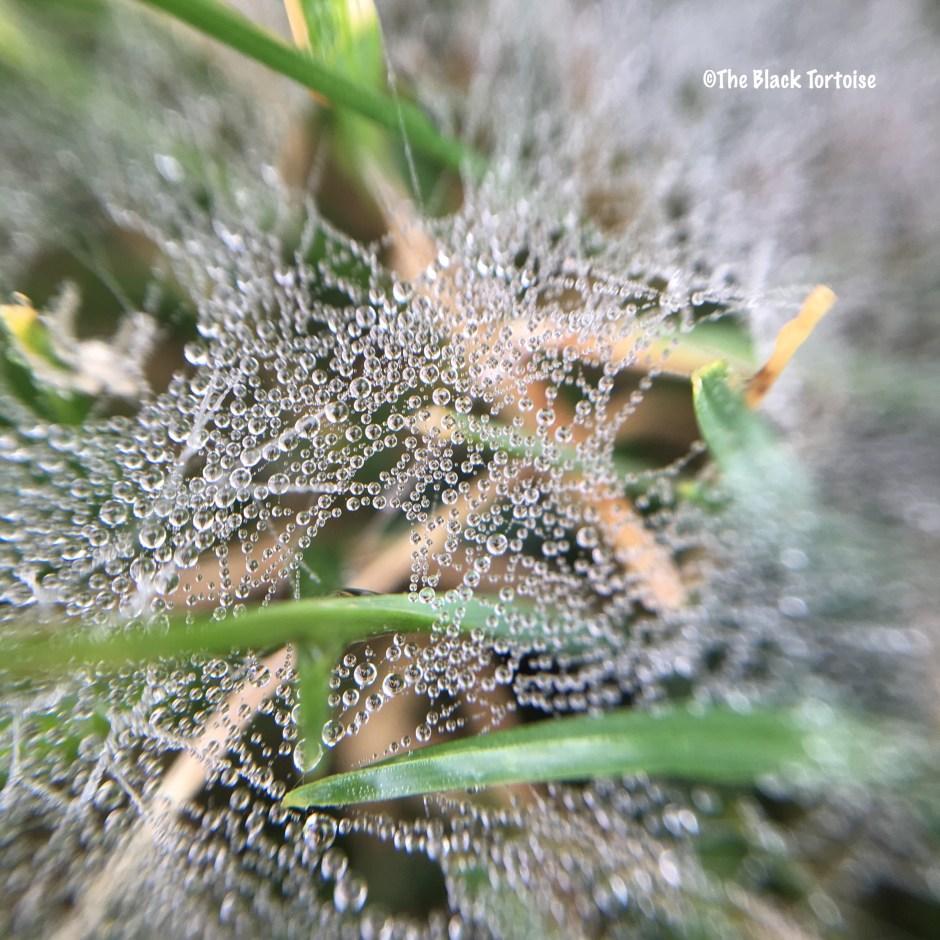 webs - 2