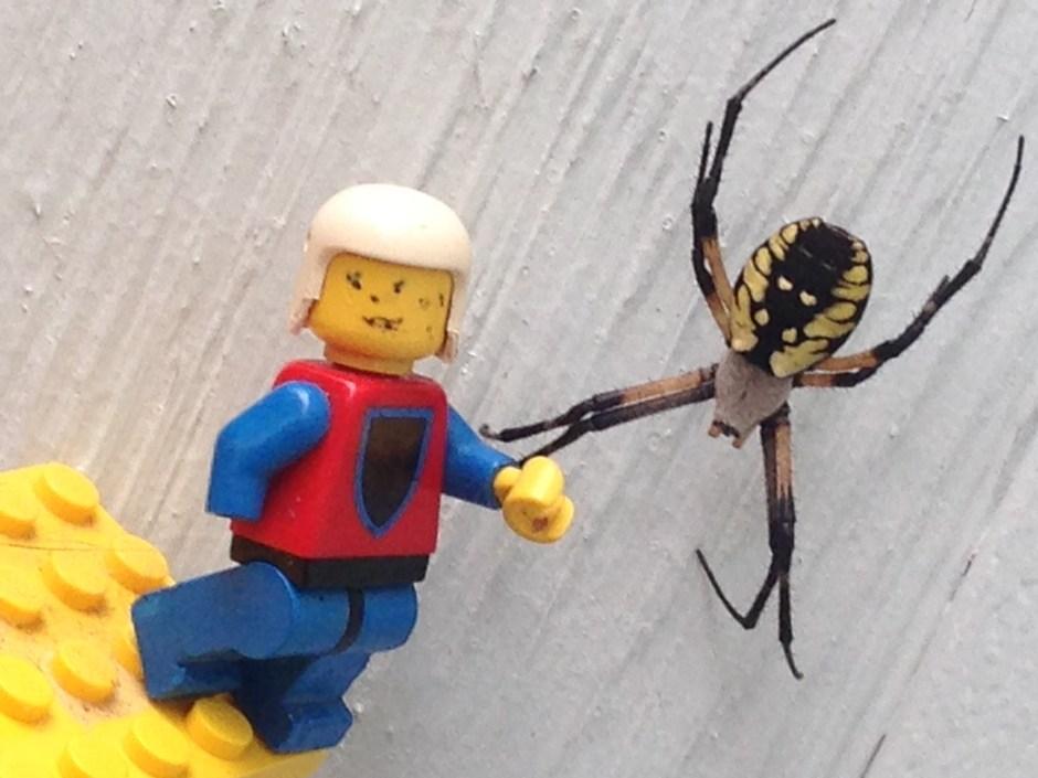 spider - 2