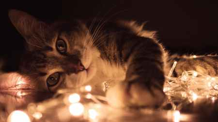 gray tabby cat lying on white string lights