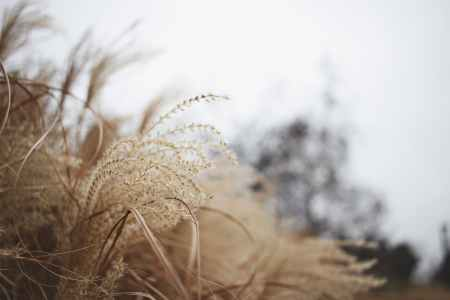 close up photography of brown grass