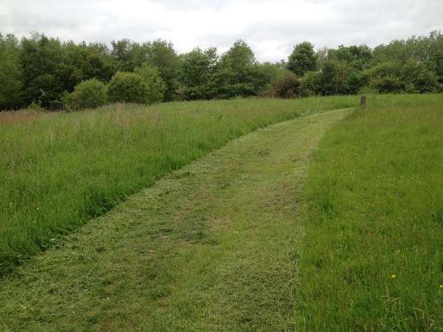 Mown path accross the site