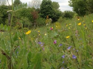 Beautifully abundant meadow