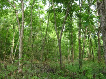 Forest/Woodland Management
